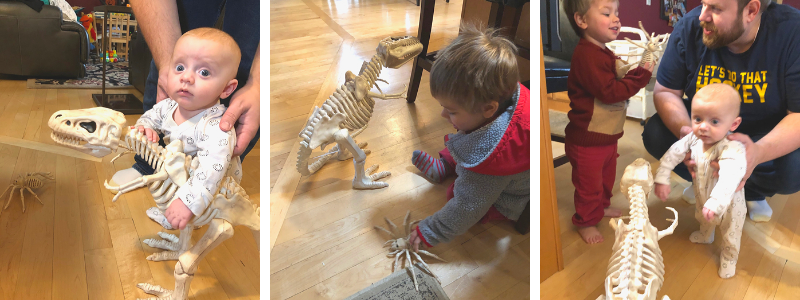 Halloween t-rex skeleton decorations