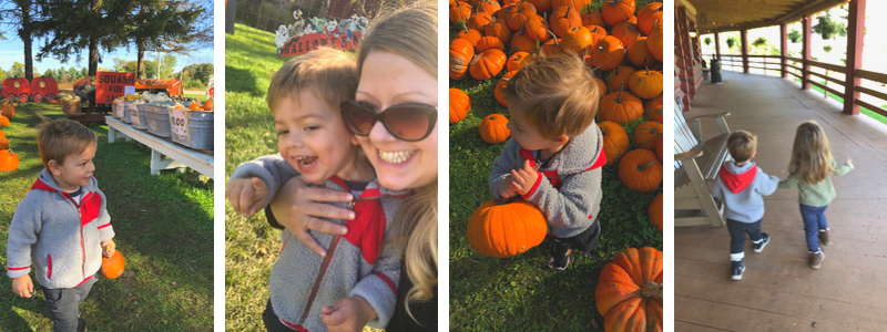 A trip to the pumpkin patch and apple orchard